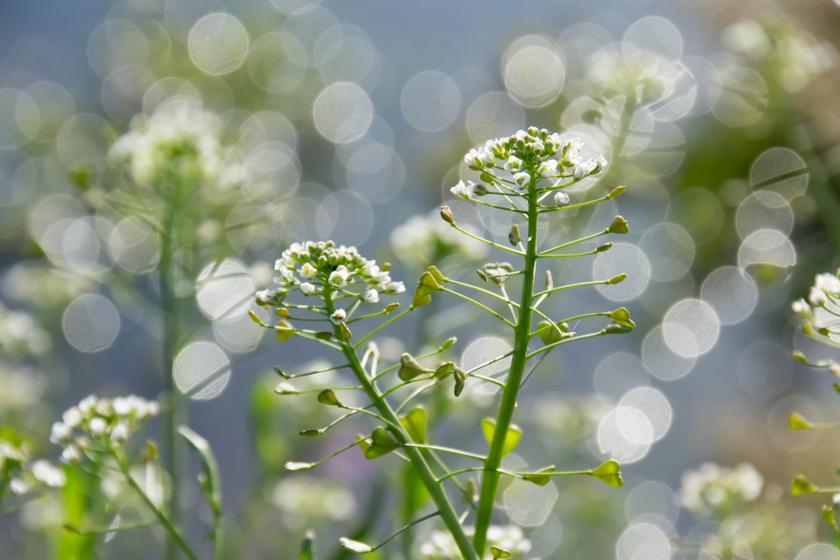 virág magas vérnyomás esetén