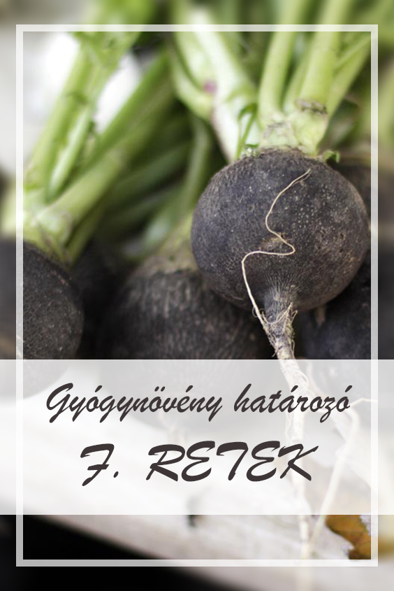 fekete retek magas vérnyomás kezelésére)