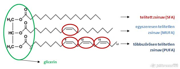 utosfeszt.hu - Magas triglicerid szint? Gyógyszerként használható az omega 3