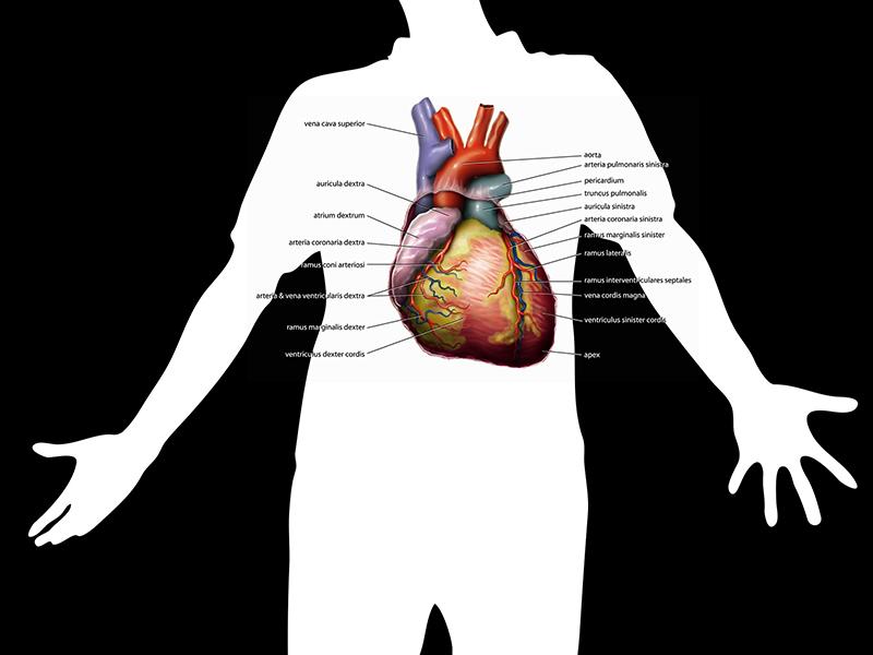mik a hipertónia tünetei akik a magas vérnyomást jóddal kezelték