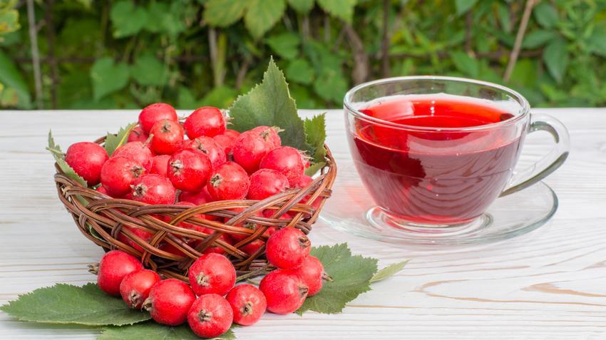 A csipkebogyó segít a magas vérnyomásban)