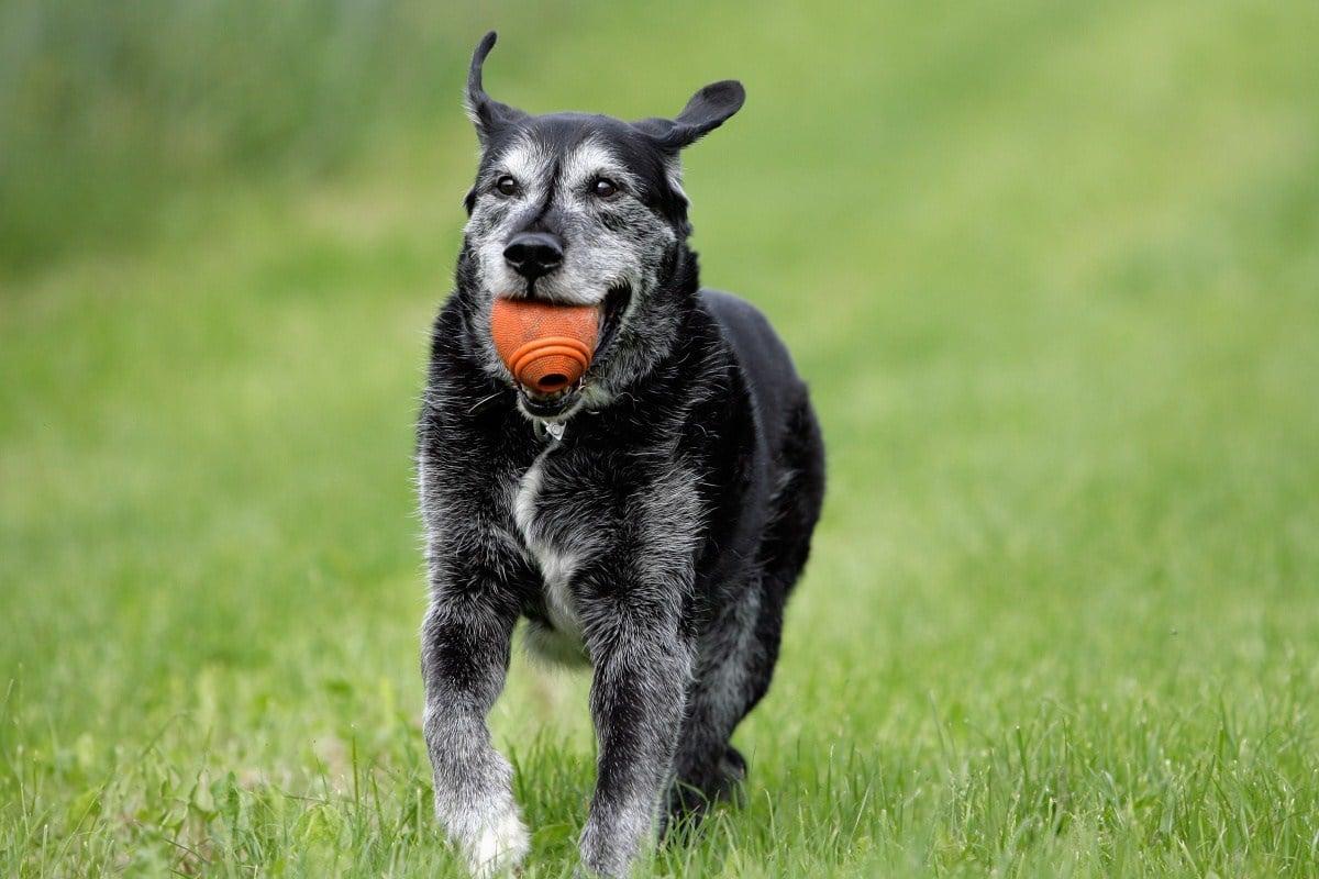 a magas vérnyomás tünetei kutyáknál