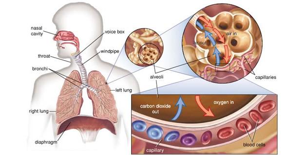 a hipertónia sémájának piócáinak szívópontjának hirudoterápiája)