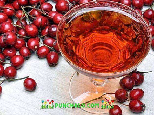 alkoholos galagonya infúziója magas vérnyomás esetén)