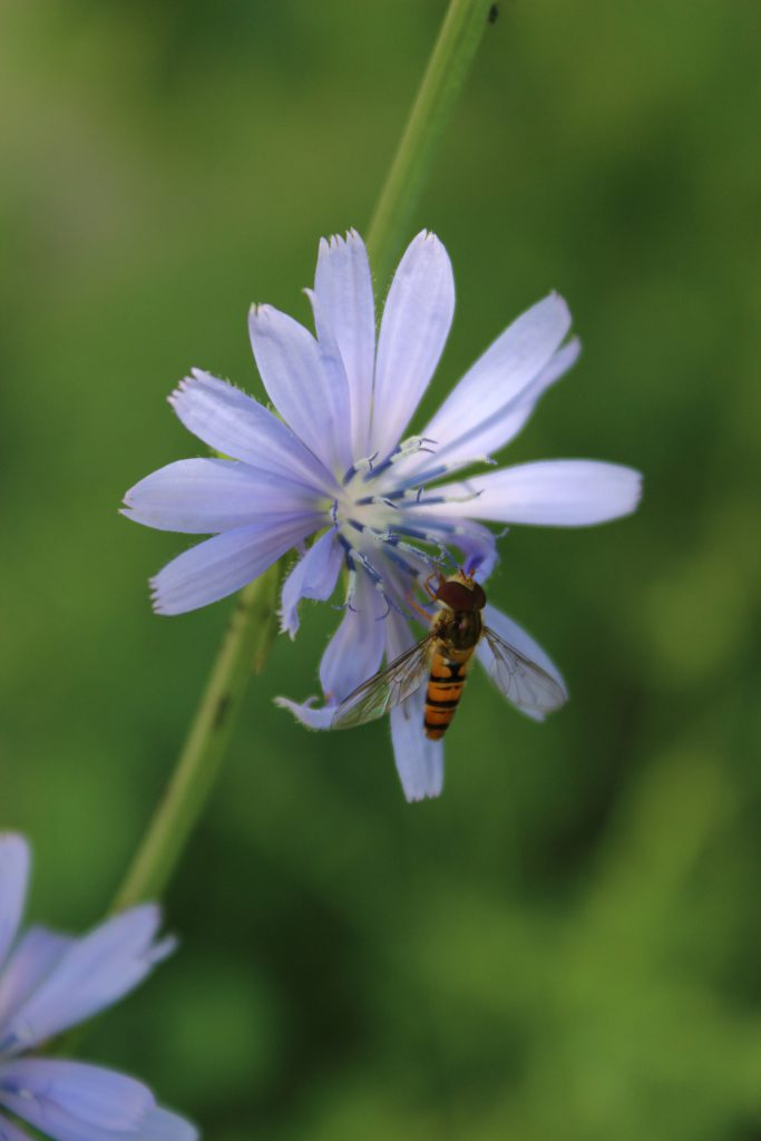 a mezei méh magas vérnyomás esetén történő alkalmazása)