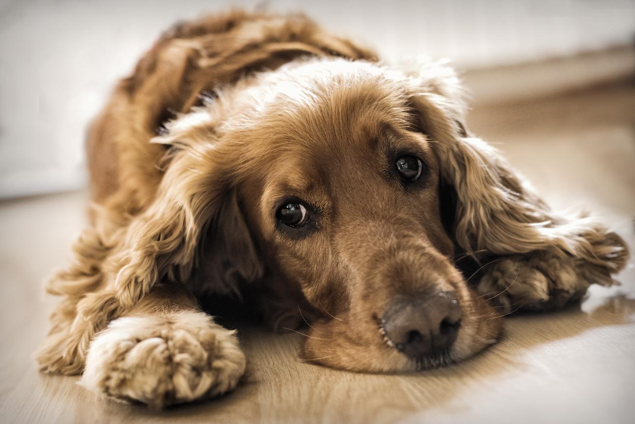 a magas vérnyomás tünetei egy kutyánál miért szédül a magas vérnyomás