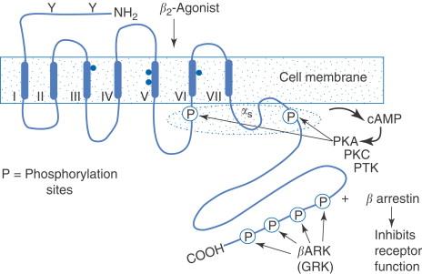 Angiotenzin-II-receptor-antagonisták | Blausen Medical