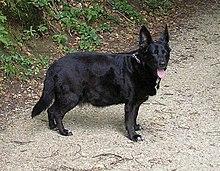 Magas vérnyomás kutyáknál - tünetek és tudnivalók - Egészség