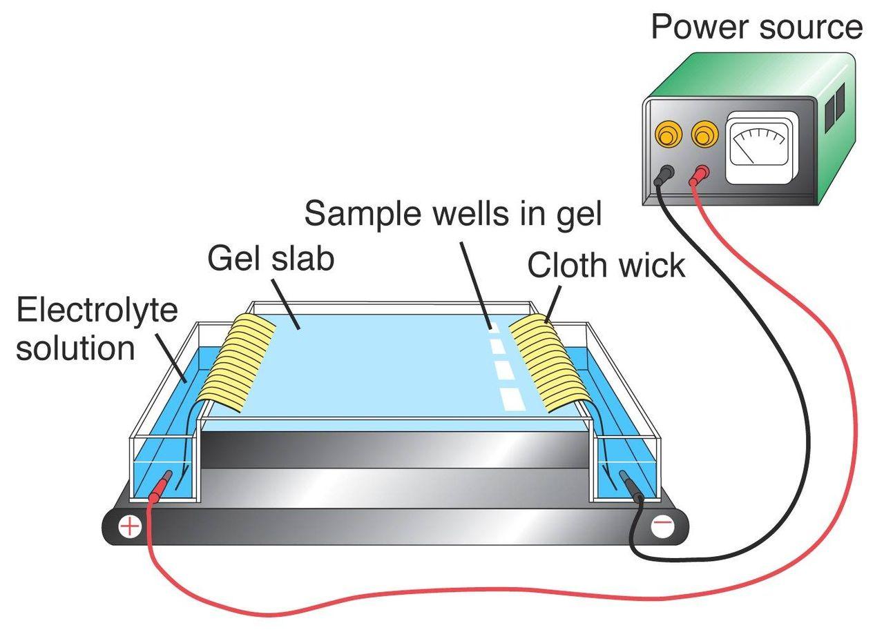 magas vérnyomás és elektroforézis