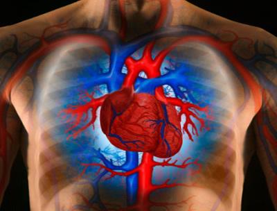 Vérnyomás gyógyszer nélküli karbantartása. Válasz Olvasómnak 26
