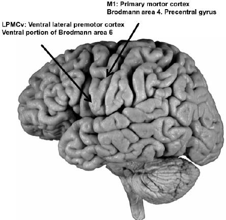 cortexin hipertónia magas vérnyomás légszomj