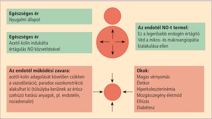 értágítók magas vérnyomás