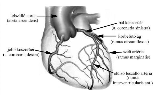 magas vérnyomás viselkedés a magas vérnyomás hatása a magzatra