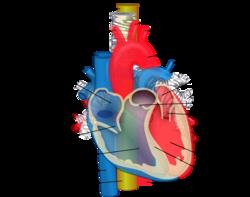 carotis arteria hypertonia magas vérnyomás és vízi étrend