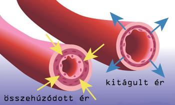 Magas vérnyomás mechanizmusok. Vérnyomás – magasvérnyomás