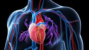 Magasvérnyomás betegség - hypertoni, hipertónia - Dimenzió egészségközpont | Központban az EGÉSZSÉG
