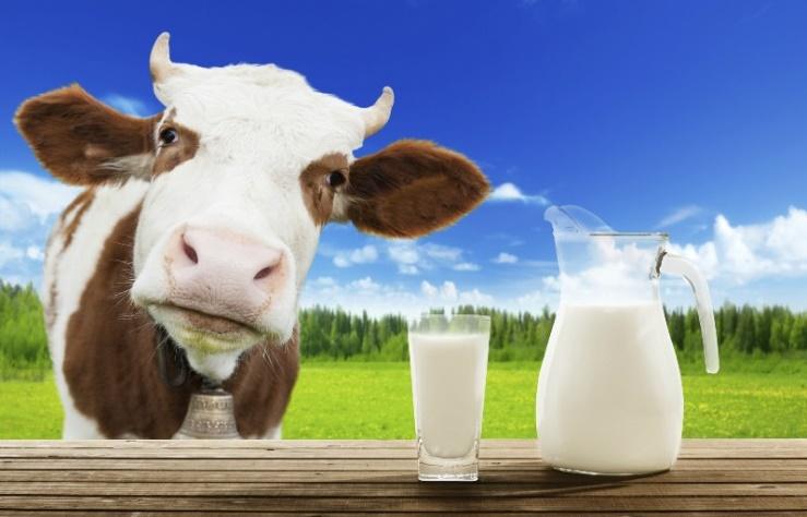magas vérnyomás és erjesztett tejtermékek jó-e sok vizet inni magas vérnyomás esetén